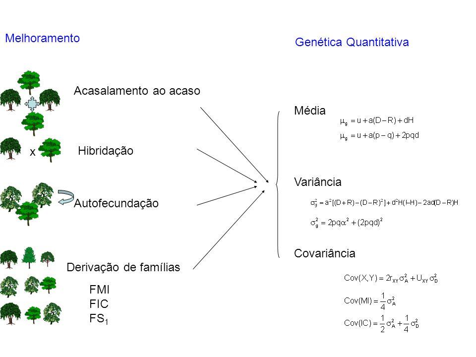 Melhoramento x Acasalamento ao acaso Hibridação Autofecundação Derivação de famílias Genética Quantitativa Média Variância Covariância FMI FIC FS 1