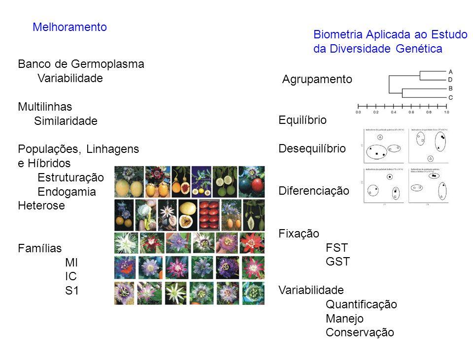 Melhoramento Biometria Aplicada ao Estudo da Diversidade Genética Agrupamento Equilíbrio Desequilíbrio Diferenciação Fixação FST GST Variabilidade Qua