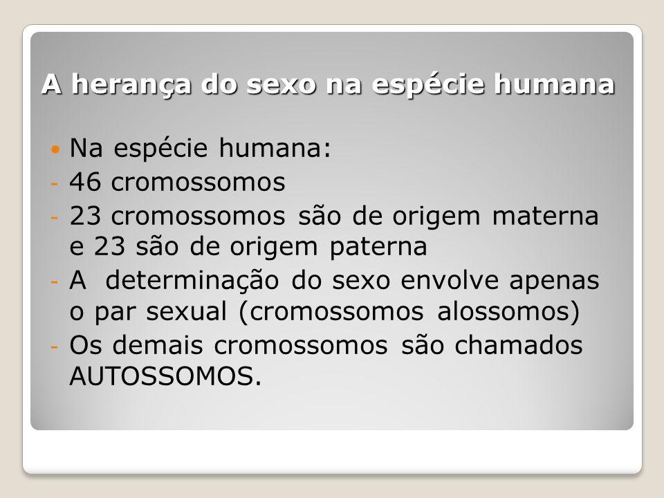 A herança do sexo na espécie humana Na espécie humana: - 46 cromossomos - 23 cromossomos são de origem materna e 23 são de origem paterna - A determin