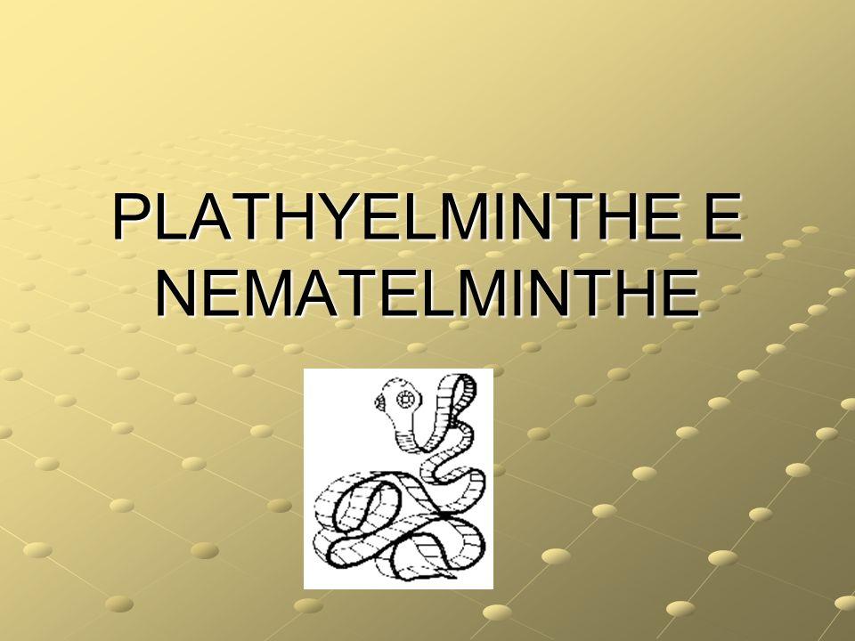 PLATHYELMINTHE E NEMATELMINTHE