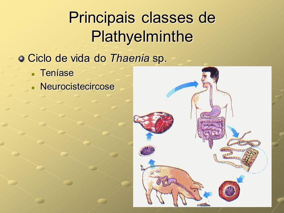Principais classes de Plathyelminthe Ciclo de vida do Thaenia sp. Teníase Teníase Neurocistecircose Neurocistecircose