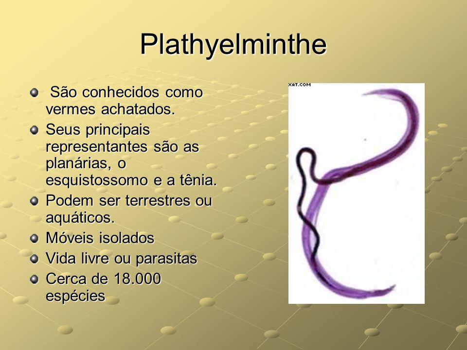 Plathyelminthe São conhecidos como vermes achatados. São conhecidos como vermes achatados. Seus principais representantes são as planárias, o esquisto