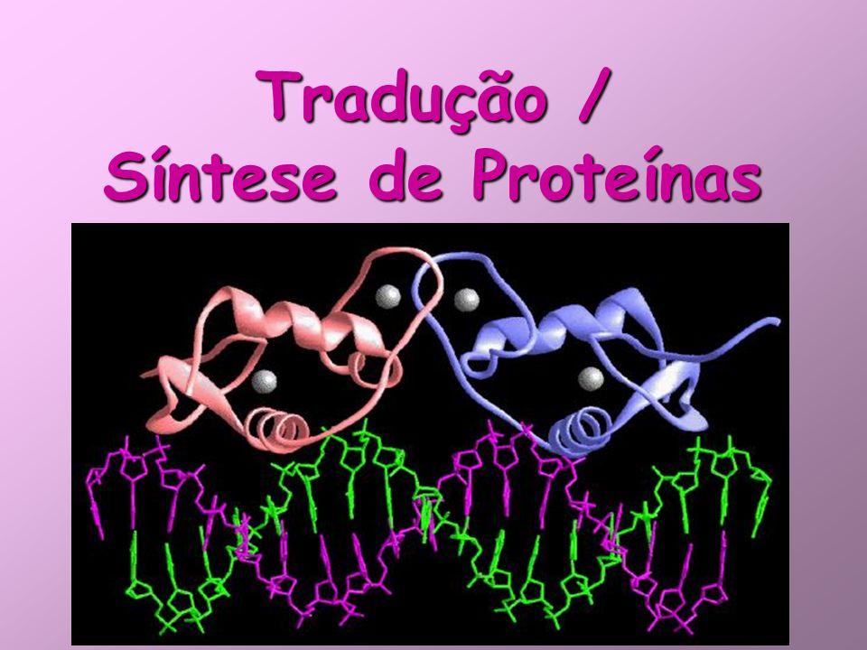 Tradução / Síntese de Proteínas