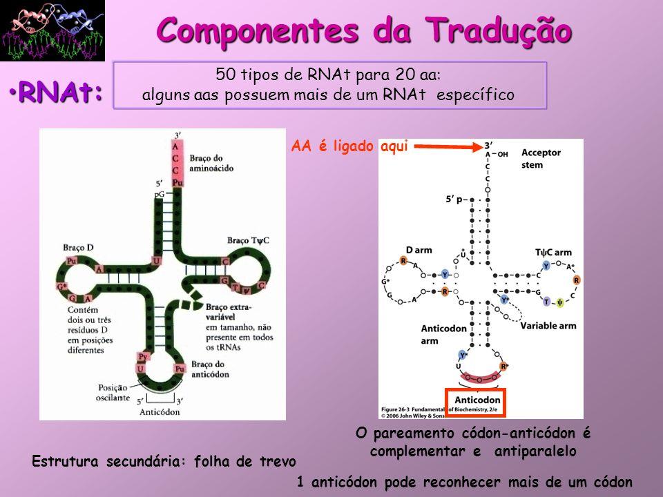 Aminoacil-RNAt sintetase: –Família de enzimas que ligam AA aos seus RNAt especificidade que aumenta a fidelidade da tradução da mensagem genética; Componentes da Tradução