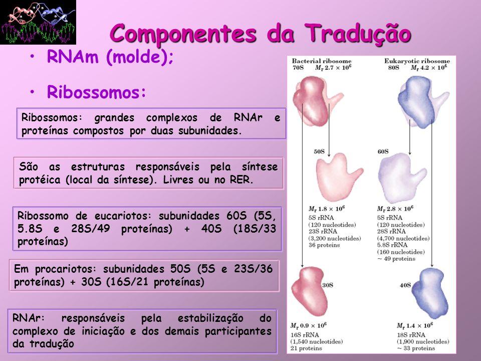 RNAm (molde); Ribossomos: Componentes da Tradução Ribossomos: grandes complexos de RNAr e proteínas compostos por duas subunidades. São as estruturas