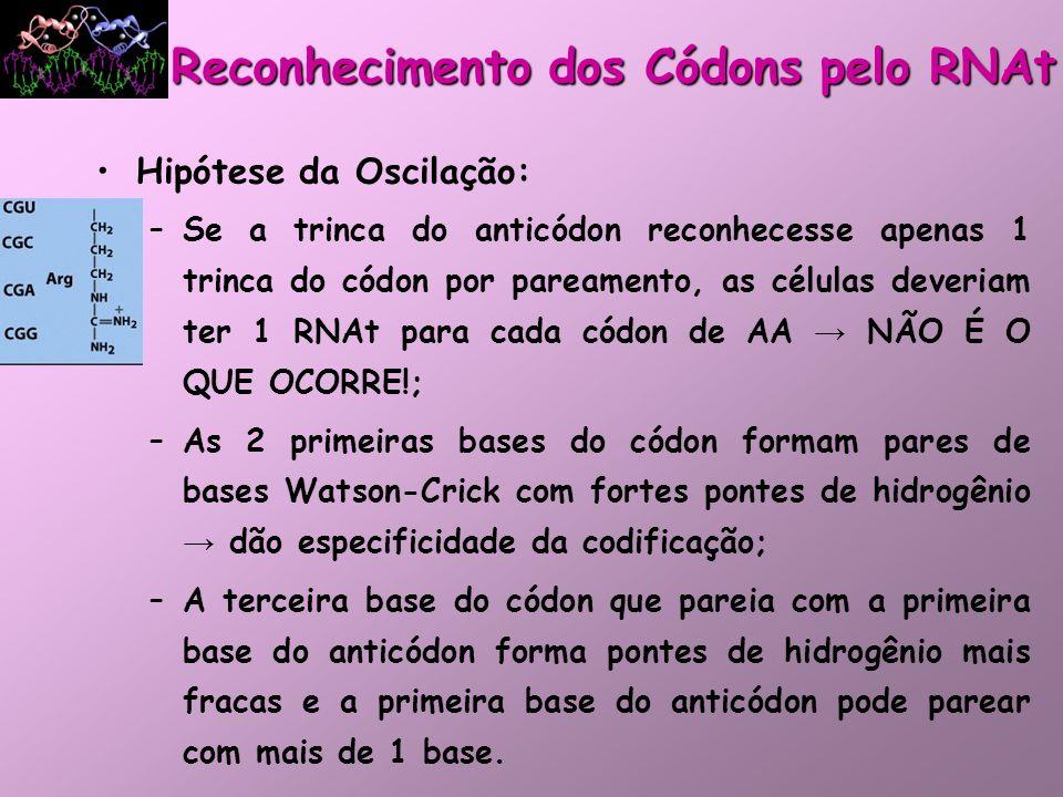 Hipótese da Oscilação: –Se a trinca do anticódon reconhecesse apenas 1 trinca do códon por pareamento, as células deveriam ter 1 RNAt para cada códon