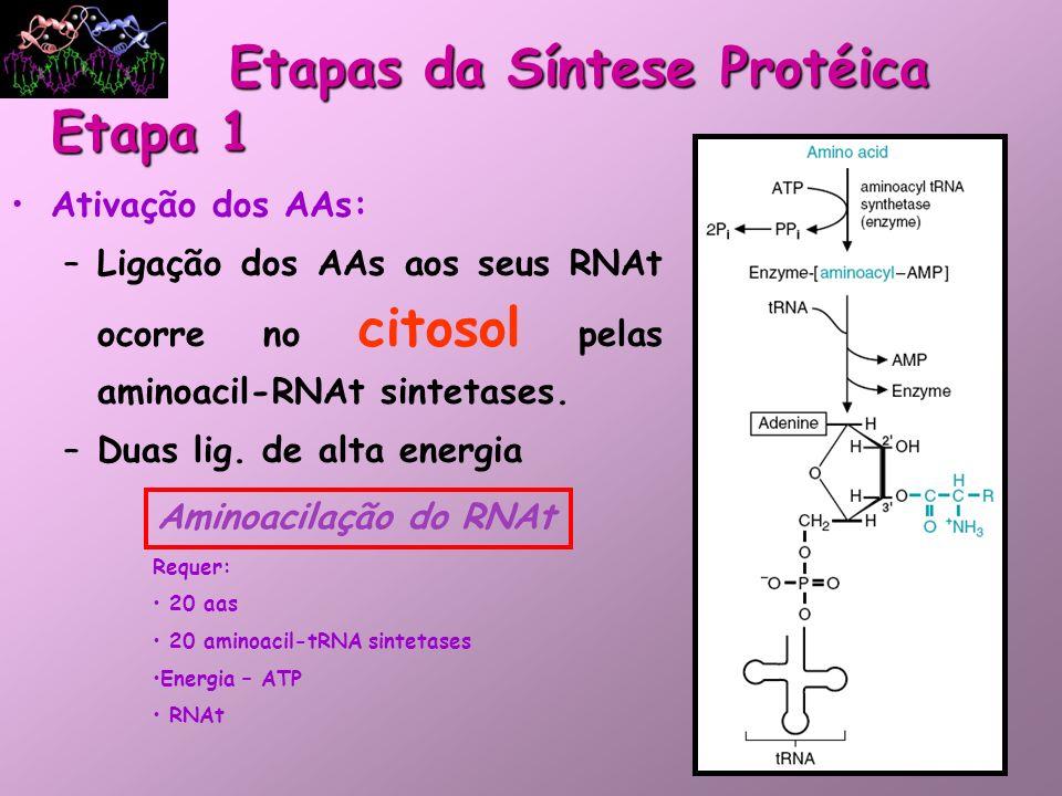 Ativação dos AAs: –Ligação dos AAs aos seus RNAt ocorre no citosol pelas aminoacil-RNAt sintetases. –Duas lig. de alta energia Etapas da Síntese Proté