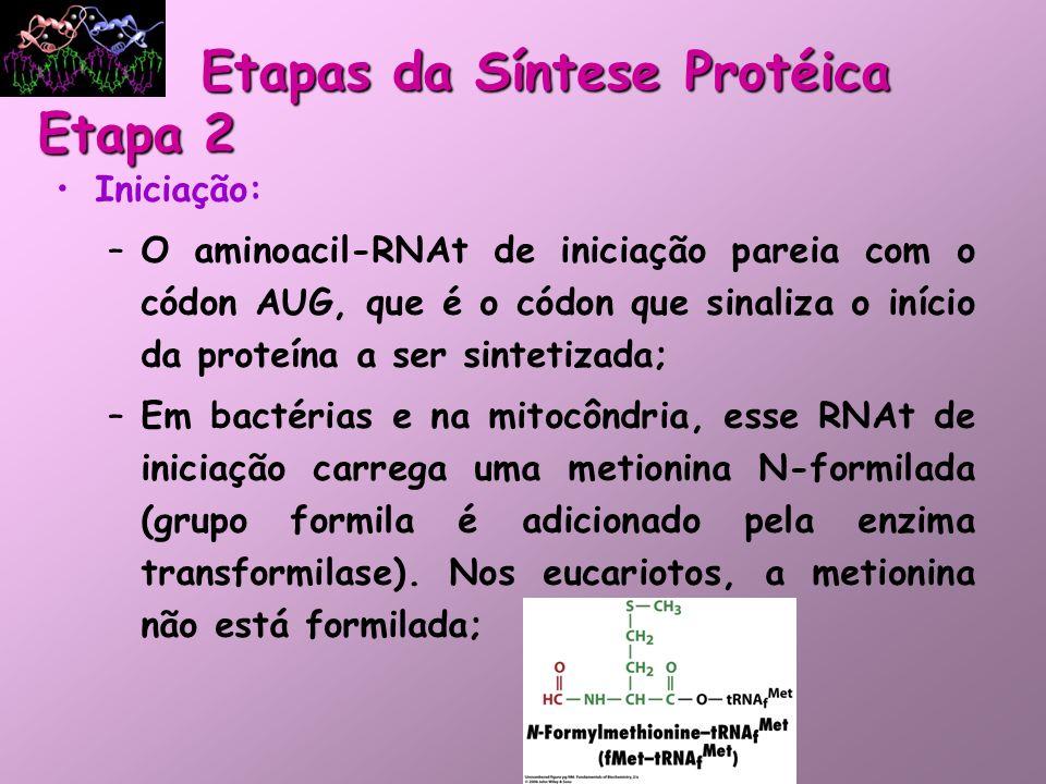 Iniciação Requer: RNAm aminoacil-tRNA de iniciação – metionina códon de iniciação - AUG Subunidade 30S e 50S Fatores de iniciação GTP Cofator enzimático – Mg+2