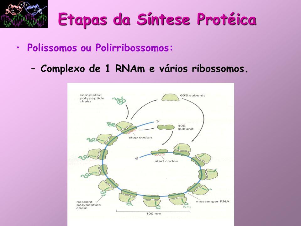Após a tradução, algumas proteínas, antes de assumirem a sua conformação nativa, têm a sua estrutura primária alterada por modificações pós-translacionais, como por exemplo: Fosforilação Carboxilação Modificações Pós-translacionais e a Estrutura Tridimensional Etapa 5: Protrombina