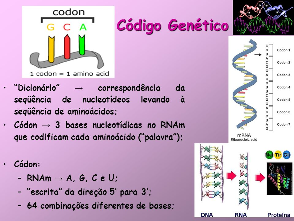 Código Genético Dicionário correspondência da seqüência de nucleotídeos levando à seqüência de aminoácidos; Códon 3 bases nucleotídicas no RNAm que co