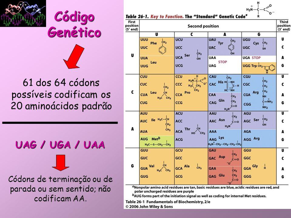 Código Genético Características: –Especificidade – um determinado códon sempre codifica o mesmo AA; –Universalidade – é conservado em todas as espécies; –Redundância ou Degeneração – um AA pode ter mais de 1 trinca que o codifica; –Contínuo – sempre lido de 3 em 3 bases.