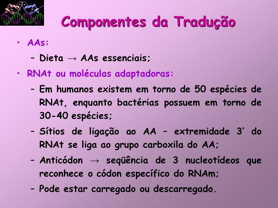 AA é ligado aqui RNAt:RNAt: 50 tipos de RNAt para 20 aa: alguns aas possuem mais de um RNAt específico Estrutura secundária: folha de trevo O pareamento códon-anticódon é complementar e antiparalelo 1 anticódon pode reconhecer mais de um códon Componentes da Tradução