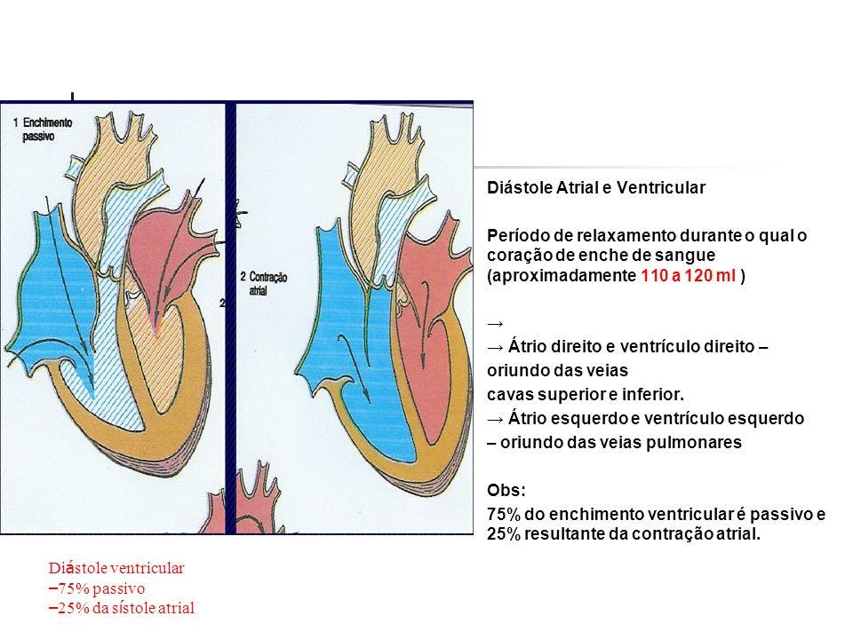 Diástole Atrial e Ventricular Período de relaxamento durante o qual o coração de enche de sangue (aproximadamente 110 a 120 ml ) Átrio direito e ventr