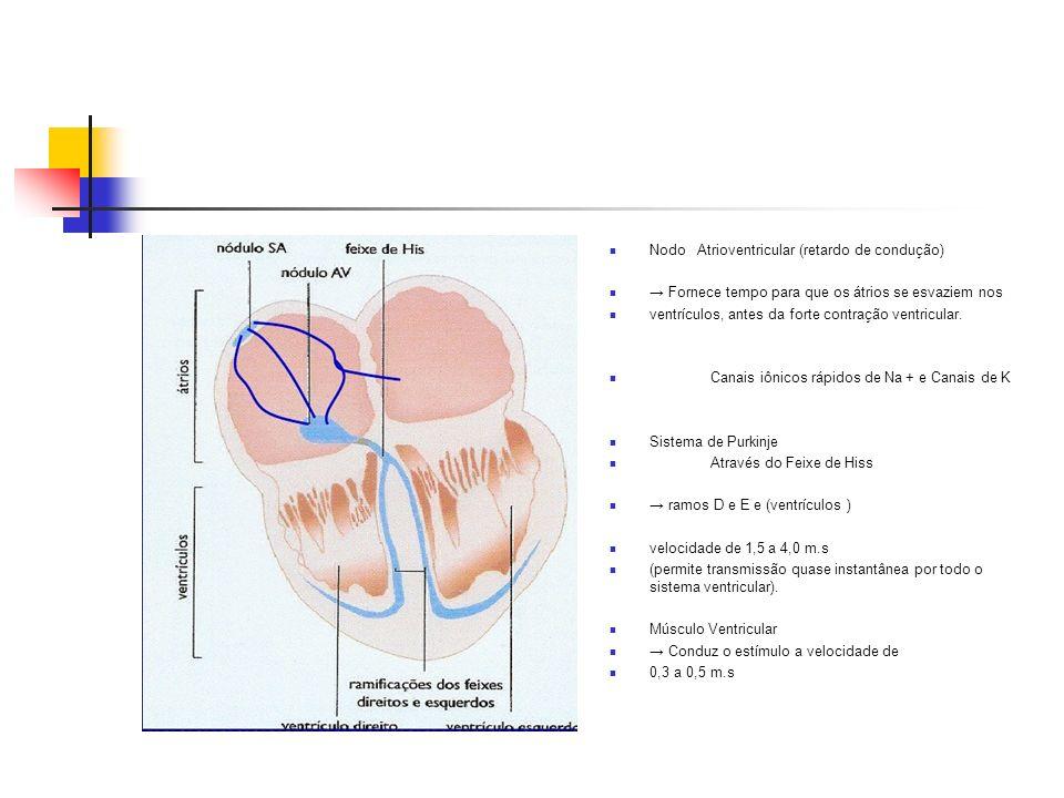 Nodo Atrioventricular (retardo de condução) Fornece tempo para que os átrios se esvaziem nos ventrículos, antes da forte contração ventricular. Canais