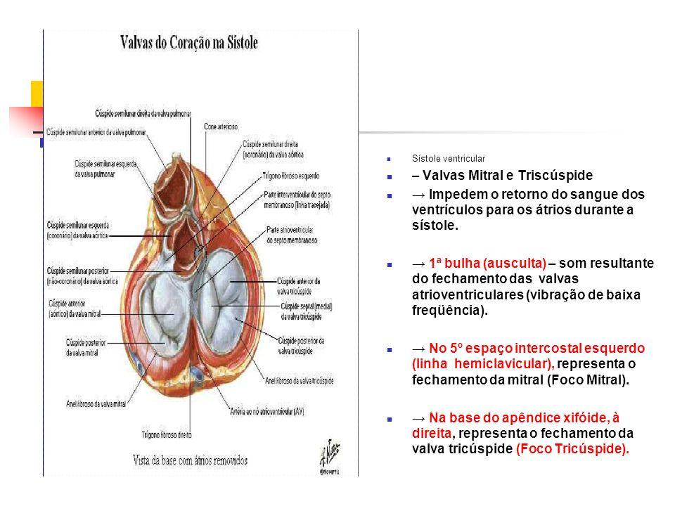 Sístole ventricular – Valvas Mitral e Triscúspide Impedem o retorno do sangue dos ventrículos para os átrios durante a sístole. 1ª bulha (ausculta) –