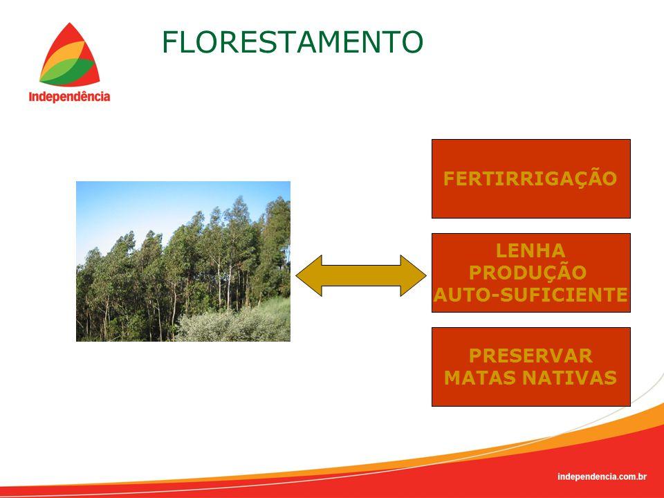 FLORESTAMENTO FERTIRRIGAÇÃO PRESERVAR MATAS NATIVAS LENHA PRODUÇÃO AUTO-SUFICIENTE
