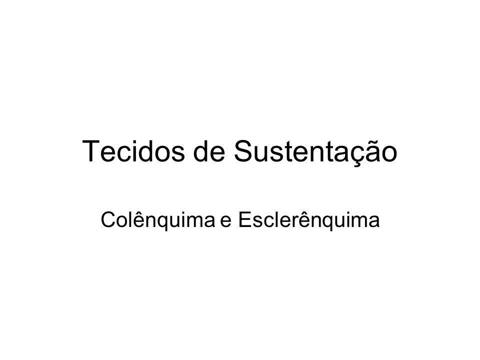 Tecidos de Sustentação Colênquima e Esclerênquima