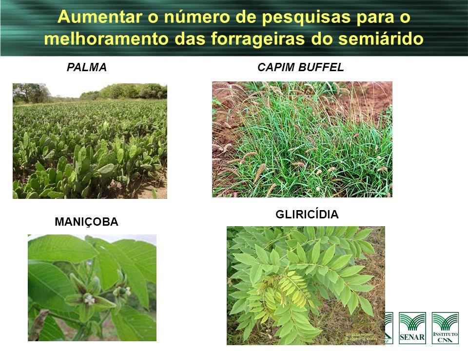 Aumentar o número de pesquisas para o melhoramento das forrageiras do semiárido PALMA GLIRICÍDIA MANIÇOBA CAPIM BUFFEL