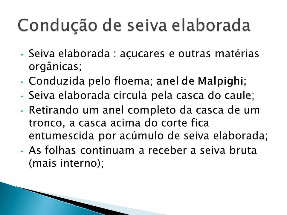 Seiva elaborada : açucares e outras matérias orgânicas; Conduzida pelo floema; anel de Malpighi; Seiva elaborada circula pela casca do caule; Retirand