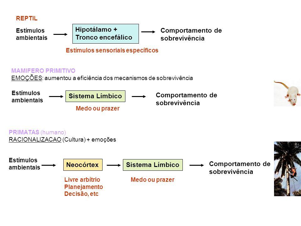 REPTIL Estímulos ambientais Comportamento de sobrevivência Hipotálamo + Tronco encefálico Estímulos ambientais Sistema Límbico Comportamento de sobrev