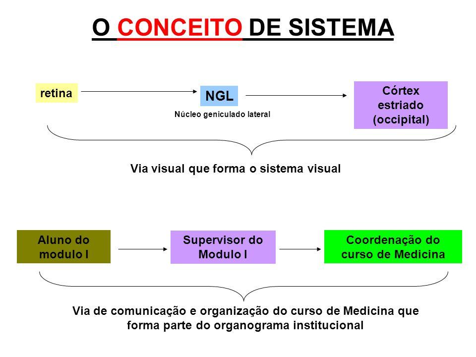 O CONCEITO DE SISTEMA retina NGL Córtex estriado (occipital) Núcleo geniculado lateral Via visual que forma o sistema visual Aluno do modulo I Supervi