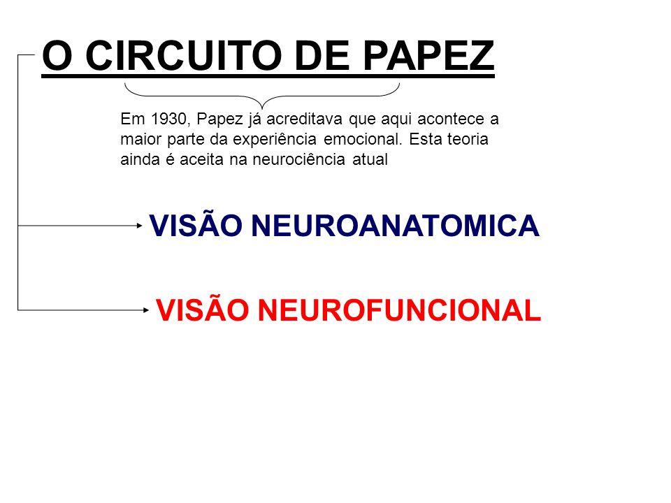 O CIRCUITO DE PAPEZ VISÃO NEUROANATOMICA VISÃO NEUROFUNCIONAL Em 1930, Papez já acreditava que aqui acontece a maior parte da experiência emocional. E
