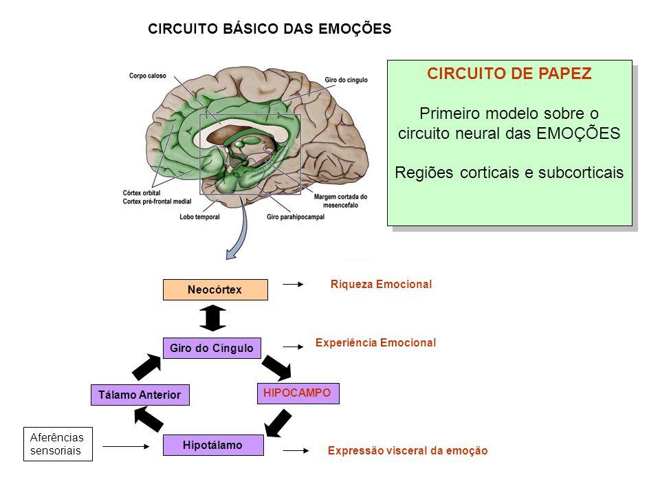 CIRCUITO DE PAPEZ Primeiro modelo sobre o circuito neural das EMOÇÕES Regiões corticais e subcorticais CIRCUITO DE PAPEZ Primeiro modelo sobre o circu