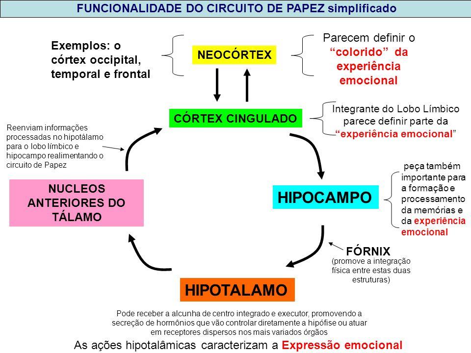 NUCLEOS ANTERIORES DO TÁLAMO CÓRTEX CINGULADO HIPOCAMPO HIPOTALAMO NEOCÓRTEX Parecem definir o colorido da experiência emocional Exemplos: o córtex oc