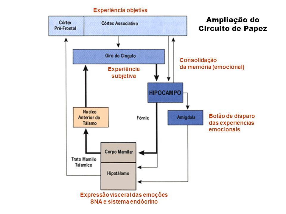 Ampliação do Circuito de Papez Botão de disparo das experiências emocionais Consolidação da memória (emocional) Experiência subjetiva Expressão viscer