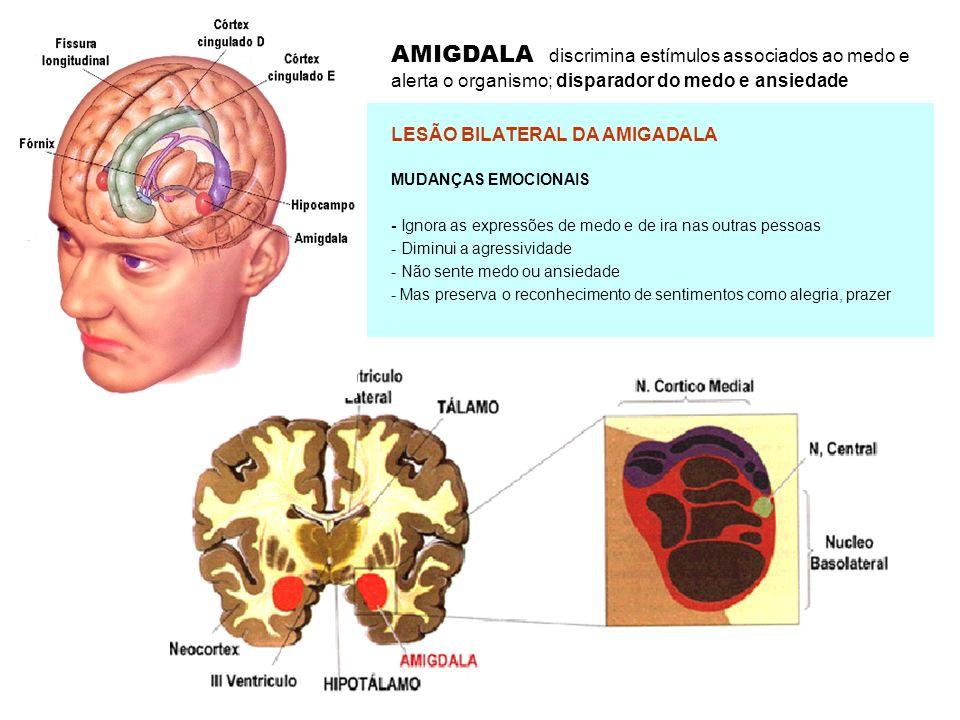 AMIGDALA discrimina estímulos associados ao medo e alerta o organismo; disparador do medo e ansiedade LESÃO BILATERAL DA AMIGADALA MUDANÇAS EMOCIONAIS