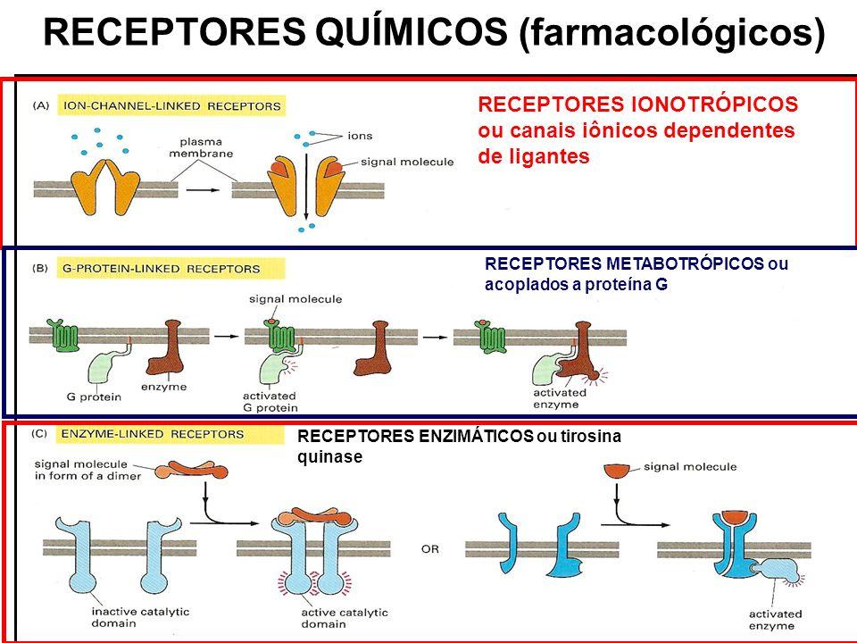 RECEPTORES QUÍMICOS (farmacológicos) RECEPTORES IONOTRÓPICOS ou canais iônicos dependentes de ligantes RECEPTORES METABOTRÓPICOS ou acoplados a proteí