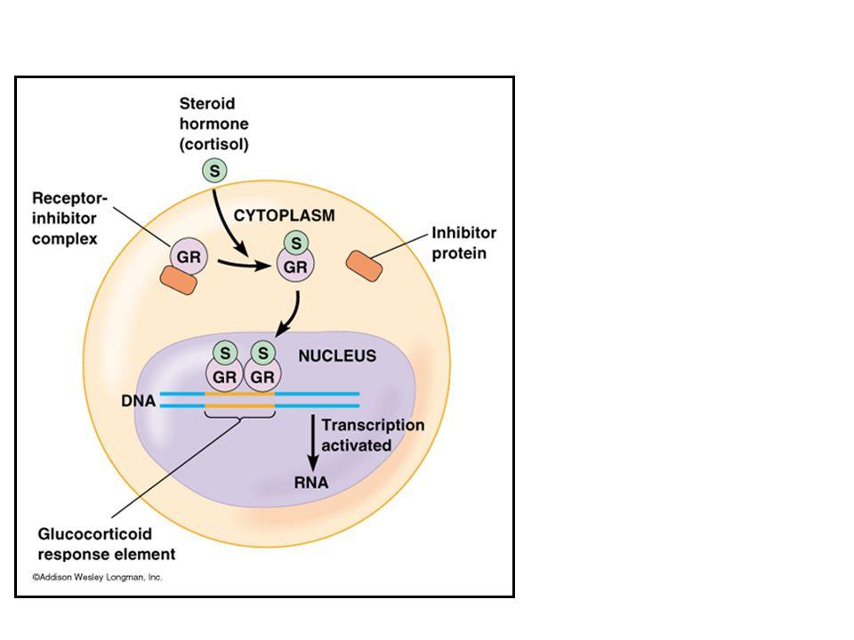 RECEPTORES INTRACELULARES E NUCLEARES RECEPTORES DE GLICORTICÓIDES