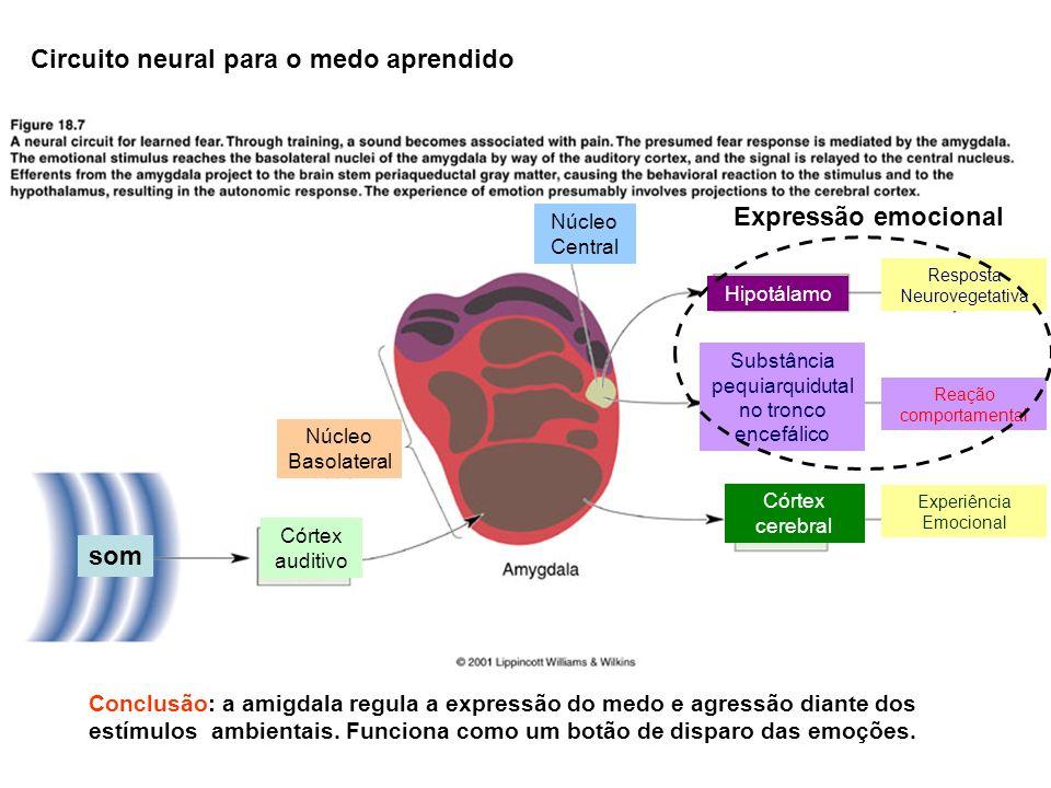 Circuito neural para o medo aprendido Córtex auditivo Núcleo Basolateral Núcleo Central Hipotálamo Substância pequiarquidutal no tronco encefálico Cór