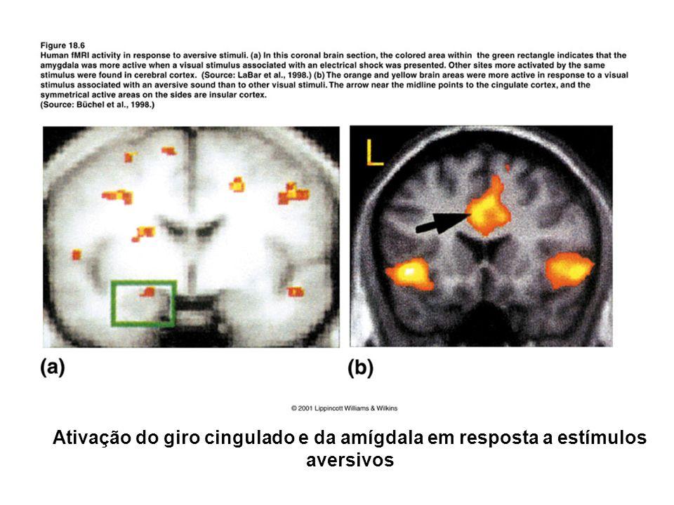 Ativação do giro cingulado e da amígdala em resposta a estímulos aversivos