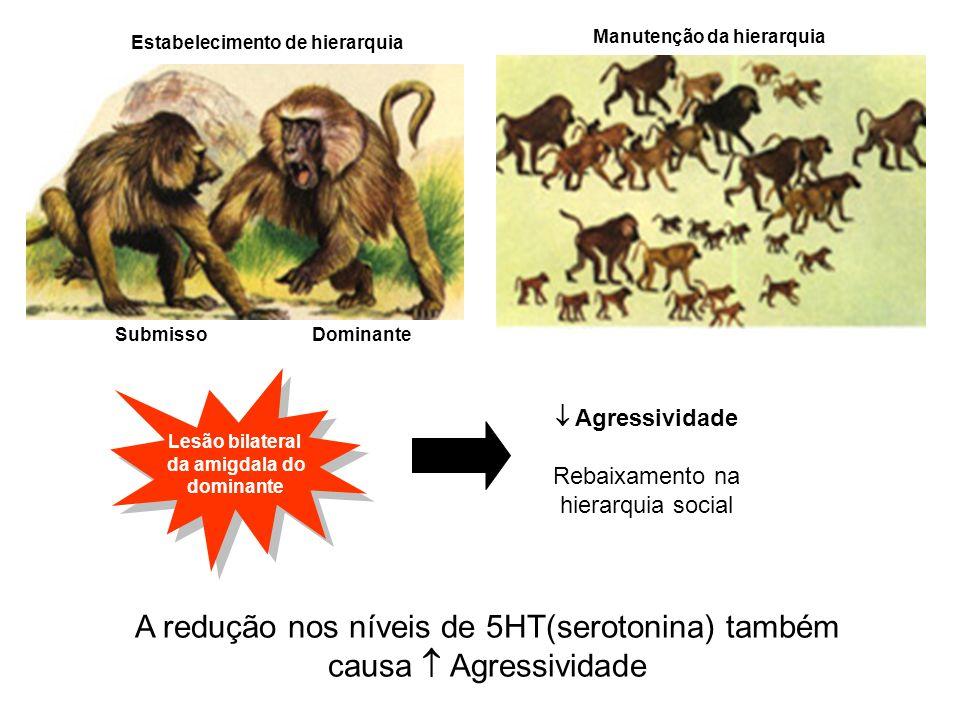Estabelecimento de hierarquia Manutenção da hierarquia Dominante Submisso Lesão bilateral da amigdala do dominante Lesão bilateral da amigdala do domi