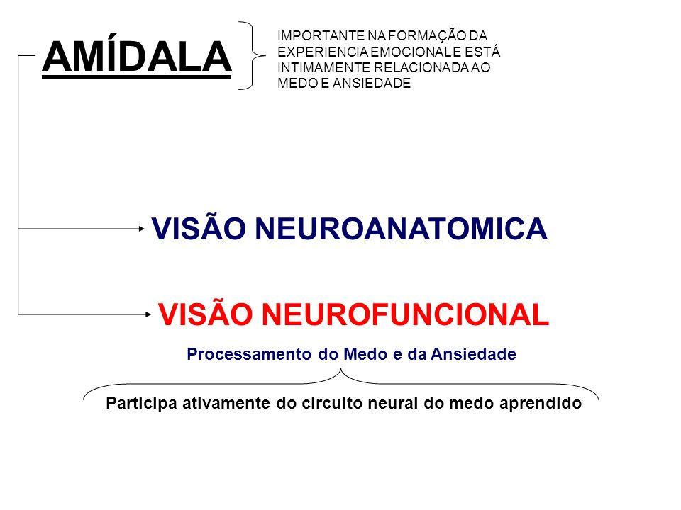 AMÍDALA VISÃO NEUROANATOMICA VISÃO NEUROFUNCIONAL IMPORTANTE NA FORMAÇÃO DA EXPERIENCIA EMOCIONAL E ESTÁ INTIMAMENTE RELACIONADA AO MEDO E ANSIEDADE P