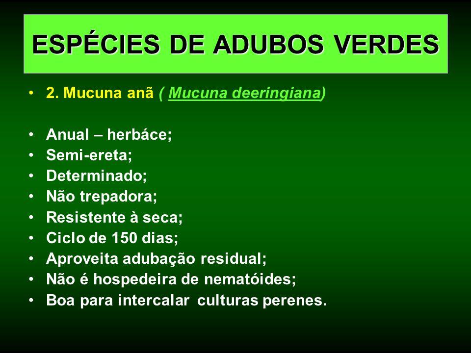 2. Mucuna anã ( Mucuna deeringiana) Anual – herbáce; Semi-ereta; Determinado; Não trepadora; Resistente à seca; Ciclo de 150 dias; Aproveita adubação