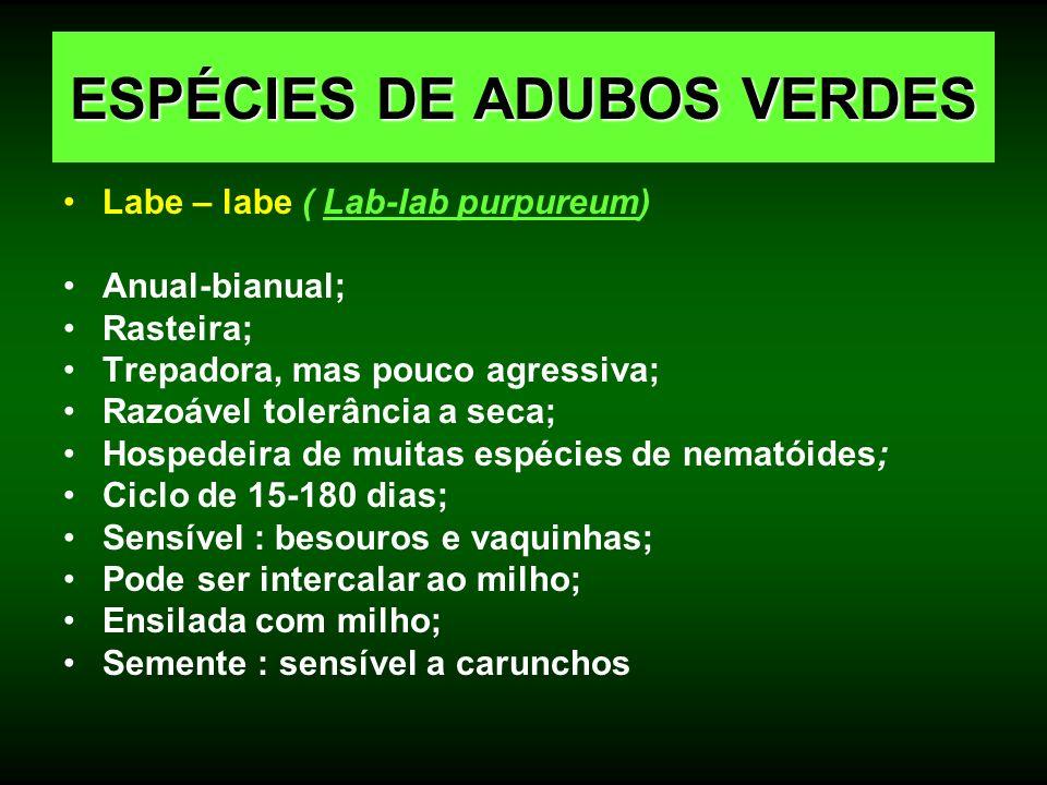 Labe – labe ( Lab-lab purpureum) Anual-bianual; Rasteira; Trepadora, mas pouco agressiva; Razoável tolerância a seca; Hospedeira de muitas espécies de