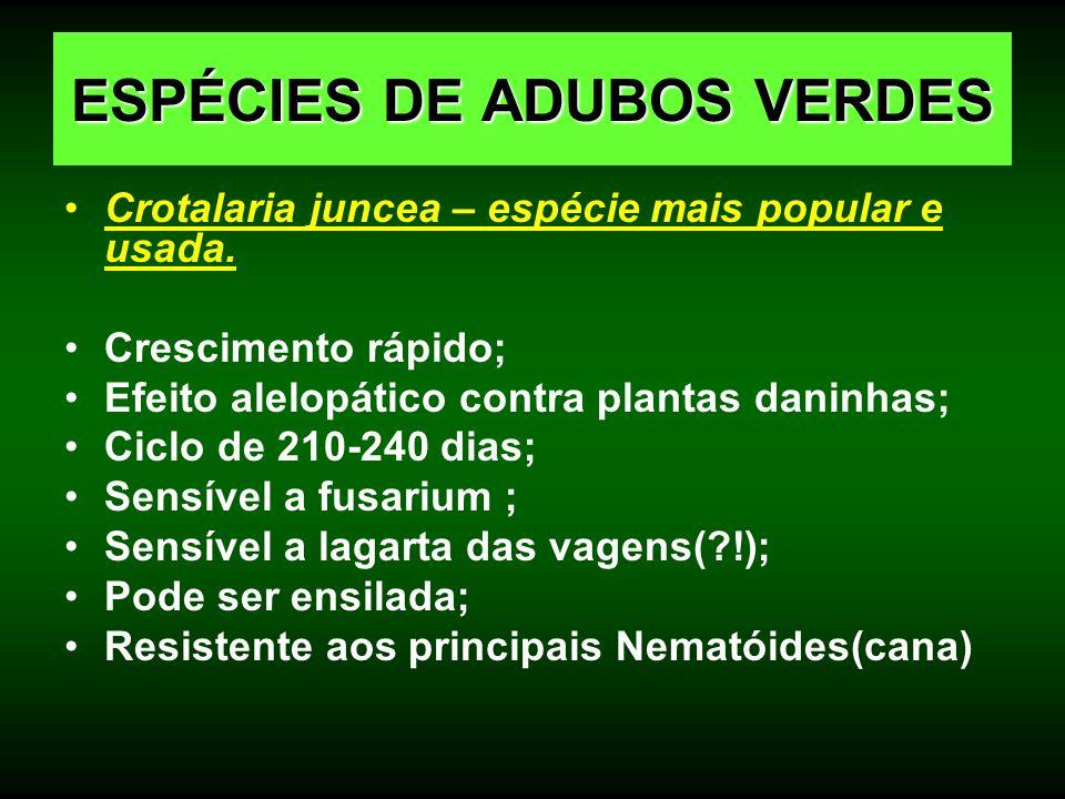 Crotalaria juncea – espécie mais popular e usada. Crescimento rápido; Efeito alelopático contra plantas daninhas; Ciclo de 210-240 dias; Sensível a fu