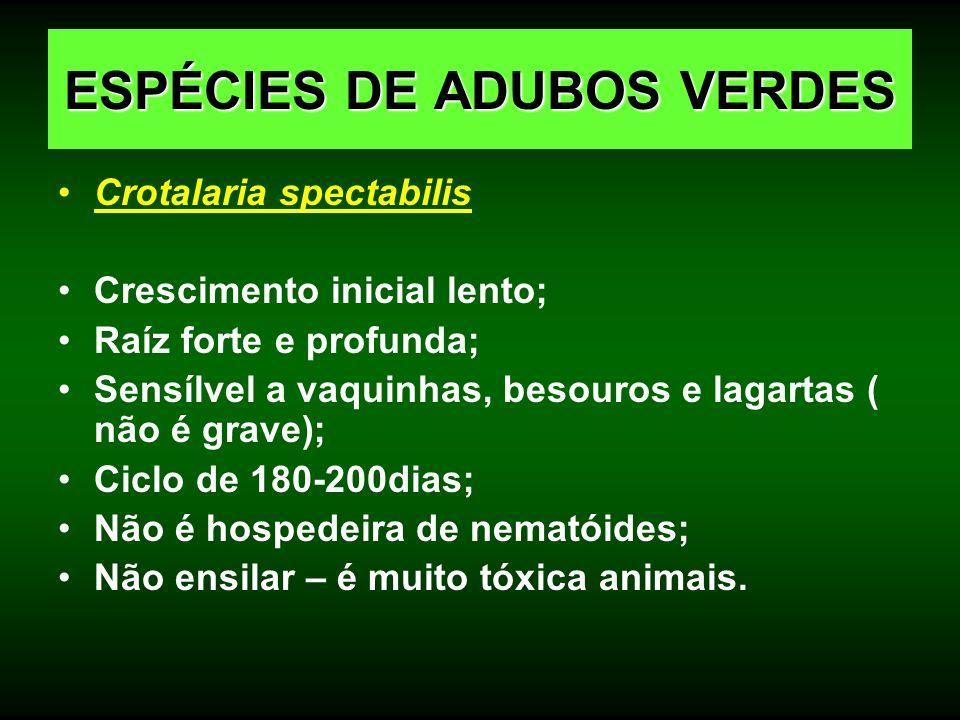 Crotalaria spectabilis Crescimento inicial lento; Raíz forte e profunda; Sensílvel a vaquinhas, besouros e lagartas ( não é grave); Ciclo de 180-200di