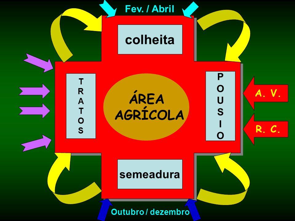 ÁREA AGRÍCOLA semeadura TRATOSTRATOS colheita Outubro / dezembro Fev. / Abril POUSIOPOUSIO A. V. R. C.