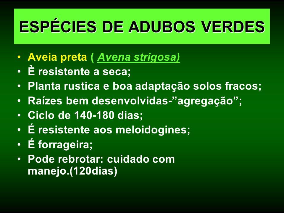 Aveia preta ( Avena strigosa) È resistente a seca; Planta rustica e boa adaptação solos fracos; Raízes bem desenvolvidas-agregação; Ciclo de 140-180 d