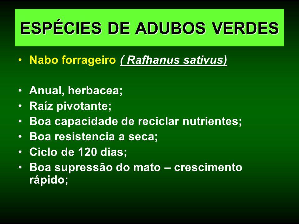 Nabo forrageiro ( Rafhanus sativus) Anual, herbacea; Raíz pivotante; Boa capacidade de reciclar nutrientes; Boa resistencia a seca; Ciclo de 120 dias;