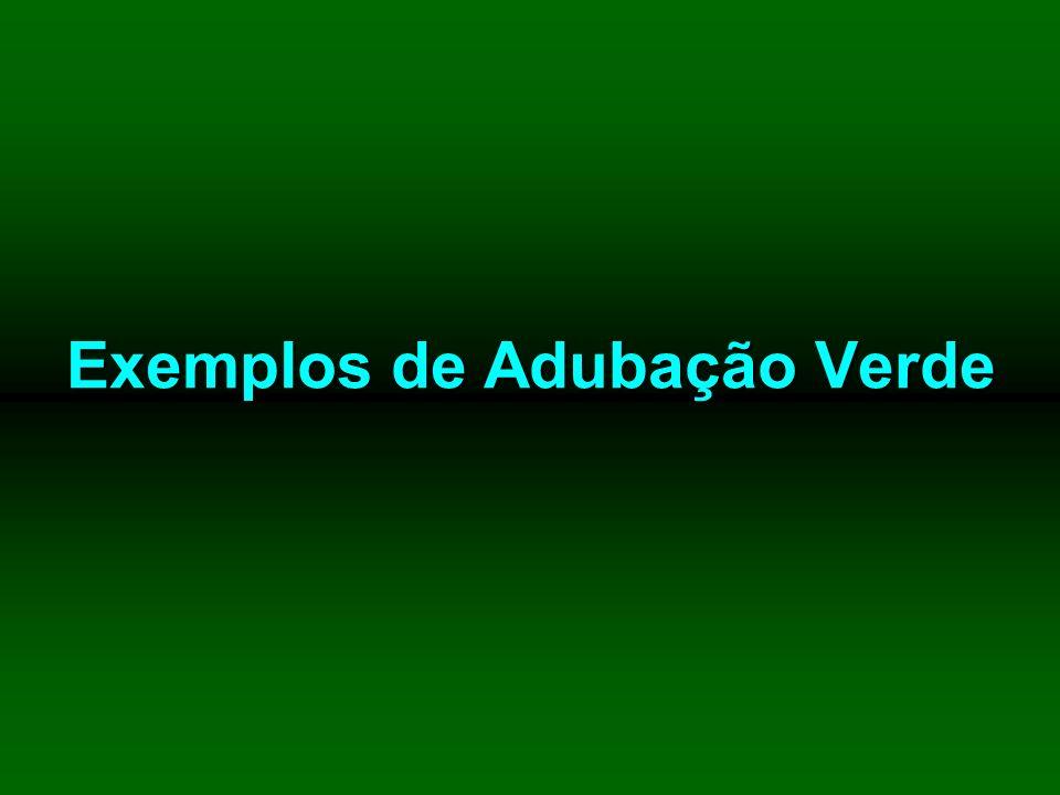 Exemplos de Adubação Verde