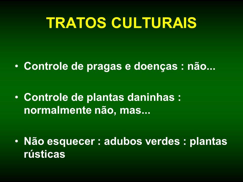 TRATOS CULTURAIS Controle de pragas e doenças : não... Controle de plantas daninhas : normalmente não, mas... Não esquecer : adubos verdes : plantas r