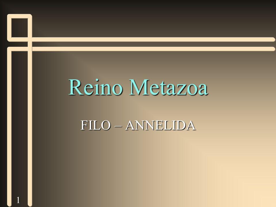 1 Reino Metazoa FILO – ANNELIDA
