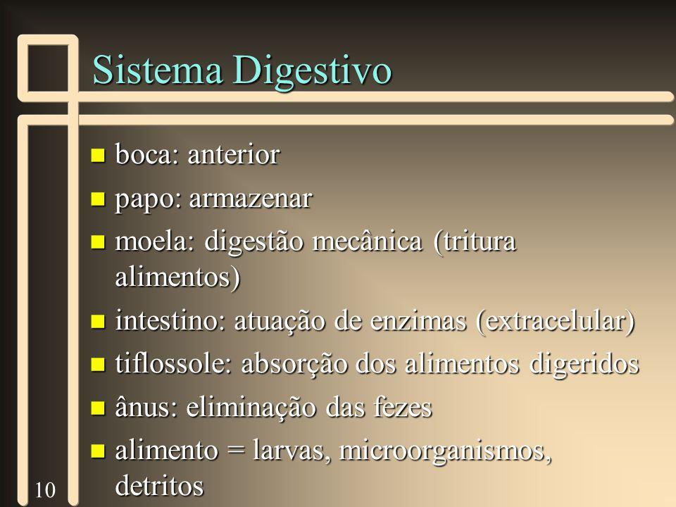 10 Sistema Digestivo n boca: anterior n papo: armazenar n moela: digestão mecânica (tritura alimentos) n intestino: atuação de enzimas (extracelular)