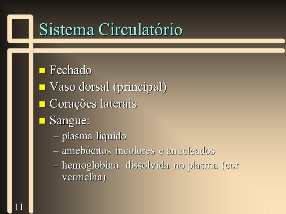 11 Sistema Circulatório n Fechado n Vaso dorsal (principal) n Corações laterais n Sangue: –plasma líquido –amebócitos incolores e anucleados –hemoglob