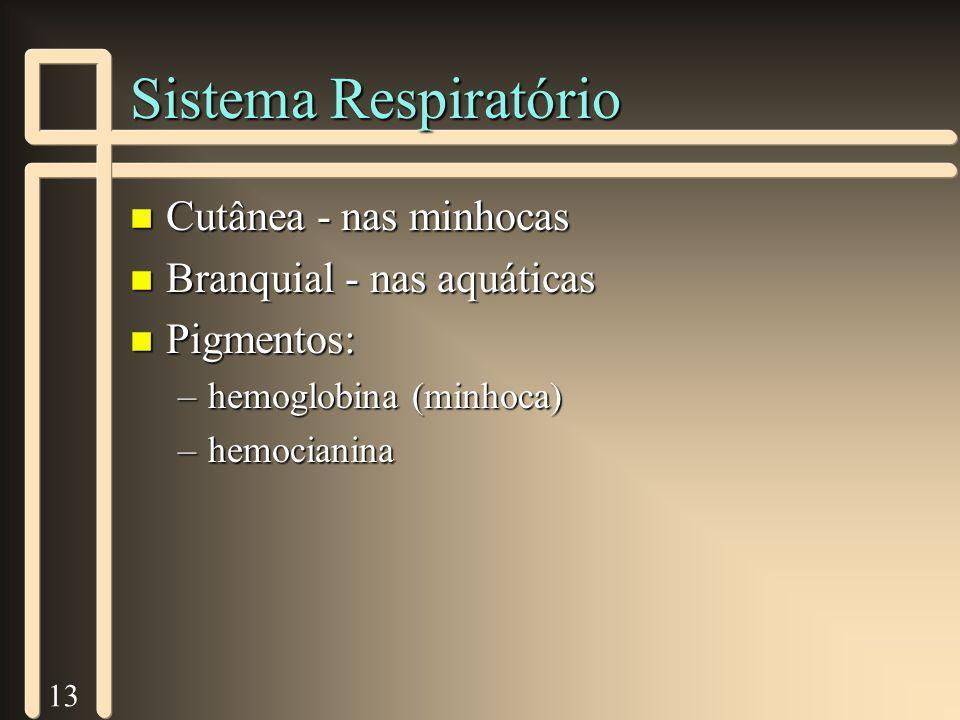 13 Sistema Respiratório n Cutânea - nas minhocas n Branquial - nas aquáticas n Pigmentos: –hemoglobina (minhoca) –hemocianina