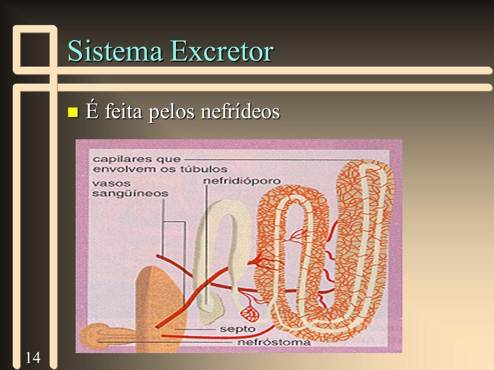 14 Sistema Excretor n É feita pelos nefrídeos